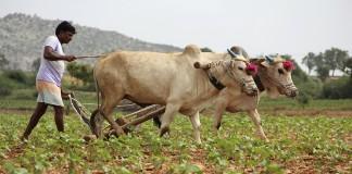 Why Small Farmers In Tamil Nadu Borrow Money At 60% Interest