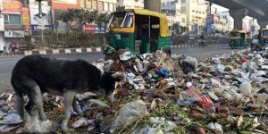 NGT Orders East Delhi Municipal Body To Act As Workers' Strike Goes On