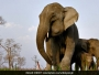 Banega Swachh India-Toilets To Help End Open Defecation And Reduce Human-Elephant Conflict In West Bengal