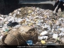 Pune To Install A Waste Processing Unit, After Chief Minister Devendra Fadnavis Promises To Resolve City's Waste Management Woes