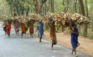 'This Forest Is A Friend': Tribal Women Fight For Land Rights In Odisha