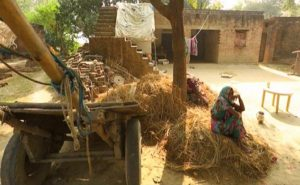 Ration Card, Cot, Cash, Land - All After He Died Of Hunger