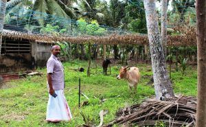 Kerala Farmers Going Back To Traditional System To Beat The Climate Change