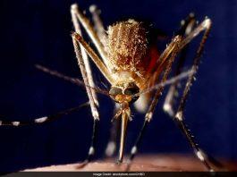 Drug-resistant Malaria Cure Found In Plant