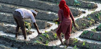 Factors That Put Indian Farmers At Higher Risk Of Suicide