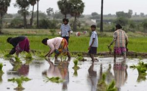 Free Trade Deal To Hurt Women Farmers, Say Activists