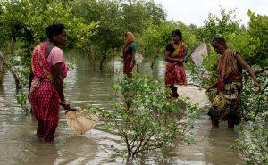 Sundarbans Widows Brave Jungles Where Tigers Killed Their Husbands