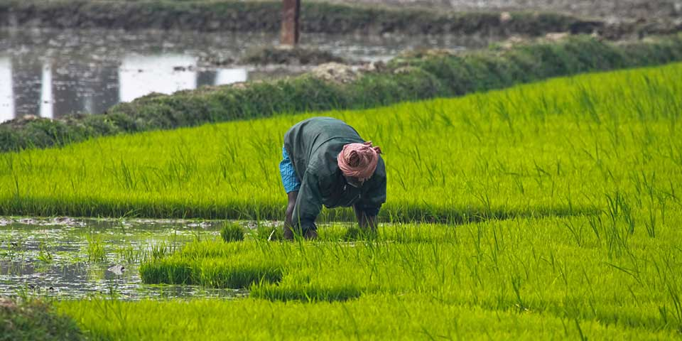 Can the Income of Farmers Double in the Next Five Years?