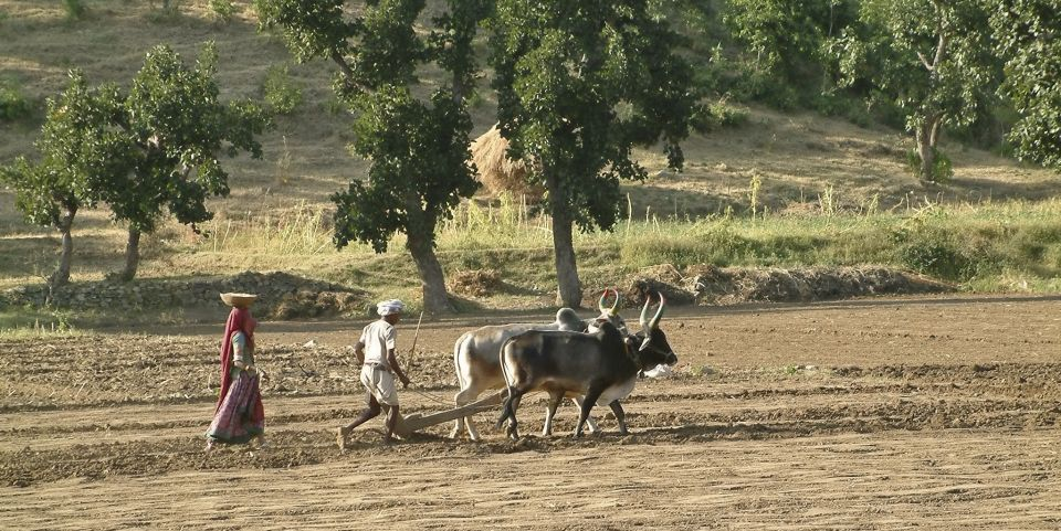 hunting and agrarian traditions Tribal hunting & co-management the court did not provide a formal mechanism to evaluate and determine traditional hunting areas open and unclaimed land.