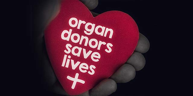 Organ Donation Essays