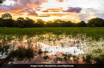 Kolkata's Natural Cleansing Wetlands Under Threat: Experts