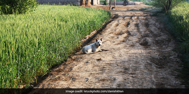 Rural Punjab To Go Open Defecation Free By End Of This Year Chief Minister Captain Amarinder Singh Gives A Nod
