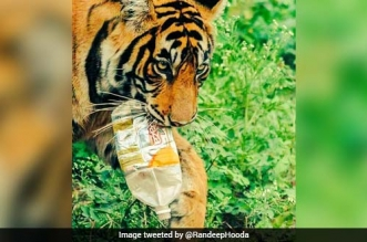 Waste Spares None: Actor Randeep Hooda Shares Image Of Tiger Carrying Discarded Plastic Bottle