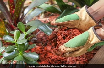 Mumbai's Khar Gymkhana Leads The Way In Waste Management, Reduces Garbage Generation By 50%