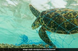 turtles_ocean_plastic-waste