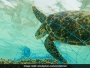 turtles_ocean_plastic-waste