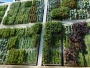 Delhi Gets A 'Green' Makeover In A Bid To Solve Its Air Pollution Crisis, Now Metro Pillars To Have Vertical Gardens