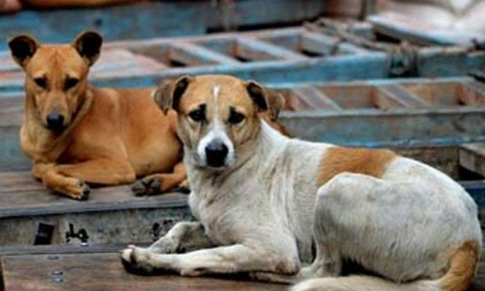 Manage Stray Animals Better To Help Swachhta, Says People In