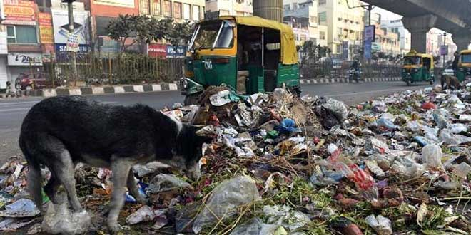 NGT Says Waste Management A Serious Challenge, Forms Committees To Monitor Disposal