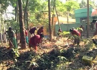 Women working in fields in a Kerala village.