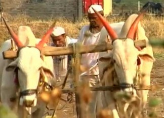 In Maharashtra's Beed, Crops Fail But Toil Continues