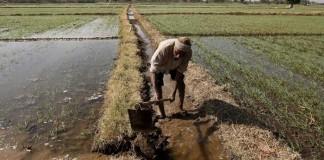 PM Modi Farmer Agricultural Narendra Modi