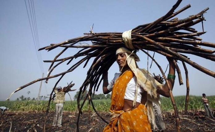 Woman working in sugarcane factory