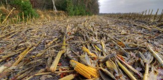 How The Food We Eat Makes Climate Change Worse: 10 Facts