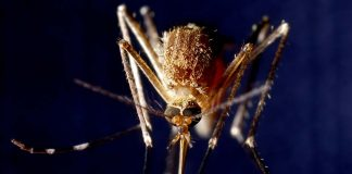 Drug-resistant Malaria Cure Found In Plant