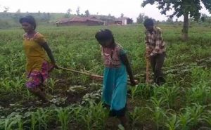 Farmer Could Not Afford Oxen, Uses Daughters To Plough Fields