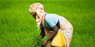 GST Framing Needs A Re-look For Women Farmers: Rights Body Chief