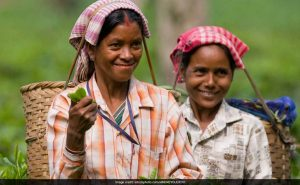 For First Time, Small Tea Growers In Assam To Get Land Rights