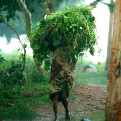 Unseasonal Rains Cause Over ₹20,000 Crores Losses in 2015