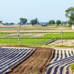 Irrigation – The Need of the Hour