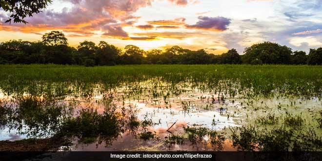 Kolkata's Natural Cleansing Wetlands Under Threat: Experts