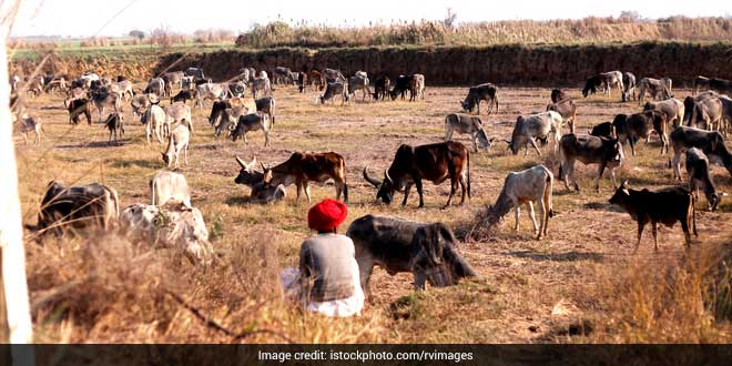 The Road To Success: How Rural Haryana Achieved The Status Of Open Defecation Free