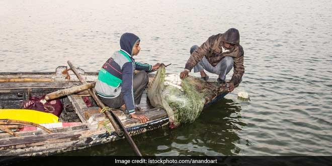 Marine life in Ganga