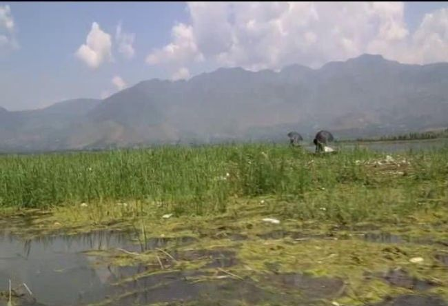 Restoring Kashmir's Glory An 18-Year Old Appointed As The Cleanliness Ambassador For Saving Wular Lake
