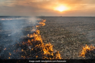 Air Pollution: Punjab aims to tackle crop residue burning from the money received under Central scheme