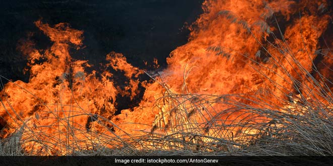 Punjab: Decline In Stubble Burning By 30%