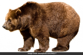 Littering In The Himalayas Leading To Change In Habit Of Brown-Bear