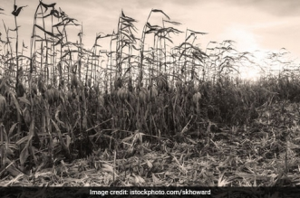 A Team Of Researchers Develop A Method To Turn Raw Biomass Into High Value Chemicals