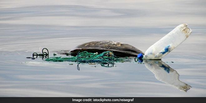 turtles_ocean_plastic-waste1