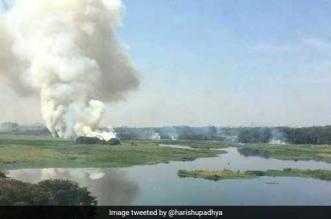 NGT asks Karnatak government to submit action plan on Bellandur lake by January 29