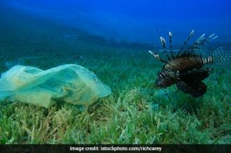 coral-plastic-waste