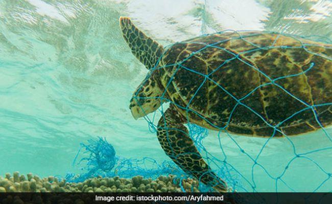 turtles-eating-plastic