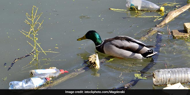 #WorldEnvironmentDay: Five Ways India Is Leading The Battle Against Plastic Pollution