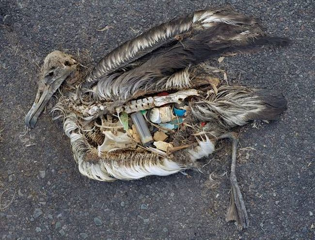 World Oceans Day Special: A Photo Feature On Impact Of Plastic Pollution On Life On Planet