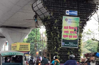 Patna Takes Up Vertical Gardening To Combat Air Pollution In The City