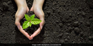 Contribute Towards Cleaner Air And Get Marks: Karnataka's New Initiative To Encourage Tree Plantation